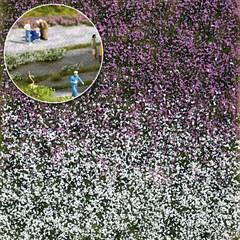 Busch 3548 - Blütenbüschel Spätsommer