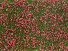 NOCH 07257 - Bodendecker-Foliage Wiese rot