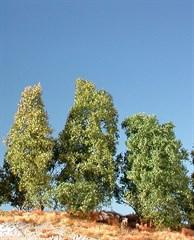 Silhouette 100-12 - Filigranbüsche