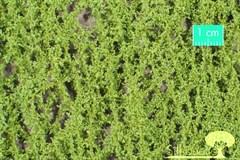 Silhouette 980-11S - Eichenlaub