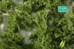 Silhouette 993-22 - Bodendecker immergrün hell